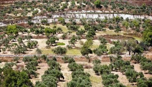 Kamu Tahu Ndak? Inilah Satu-Satunya Pohon Yang Tidak Membela Islam !