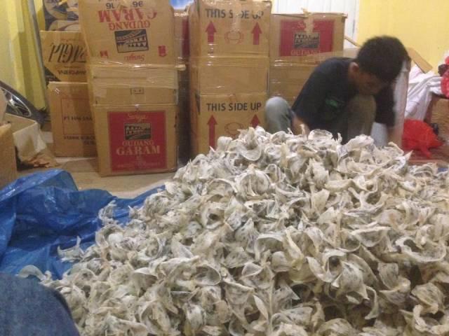 manfaat dan khasiat sarang burung walet