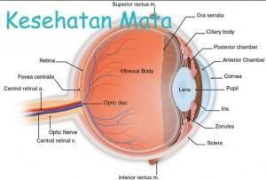 Manfaat Buah dan Sayur Untuk Kesehatan Mata