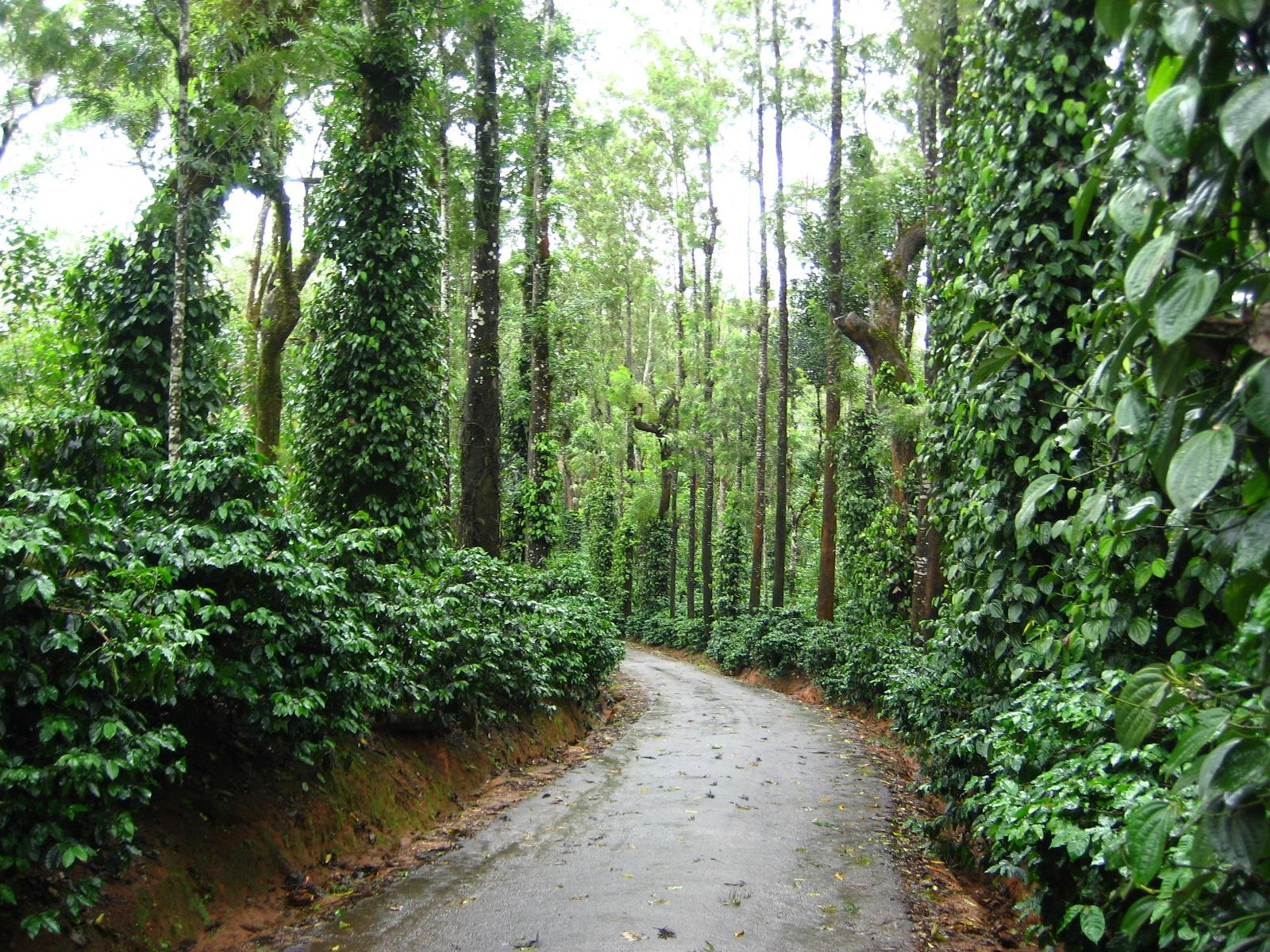 Coorg image
